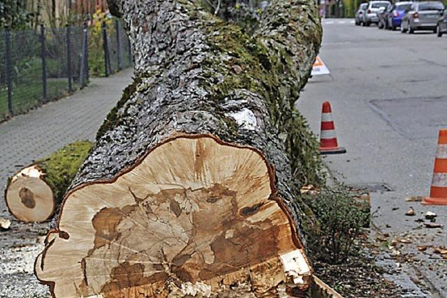 Am Morgen fielen Bäume