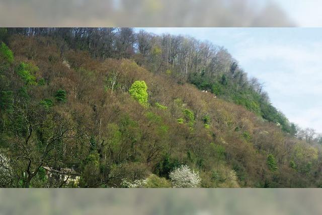 Ein gelbgrüner Fleck