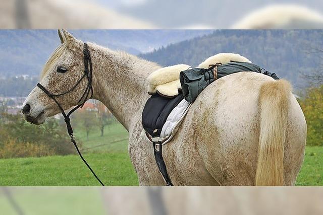 Reiter-Elite auf Gestüt Sengelen