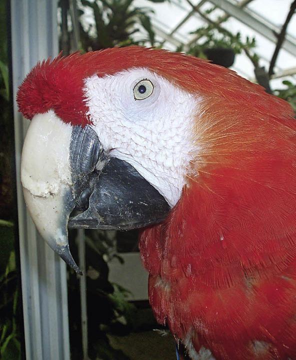 Papagei Rosalinde     Foto: dpa