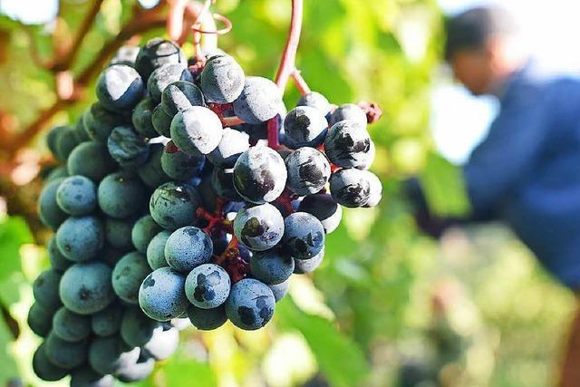Genusstouren: Die schönsten Weinwege am Oberrhein