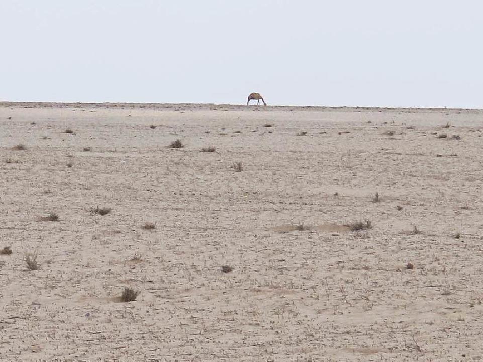 Kein grüner Halm, soweit das Auge reic...dürre hat das Horn von Afrika erfasst.  | Foto: Johannes Dieterich