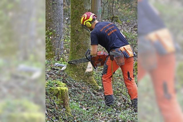 Sterben der Esche lichtet den Wald