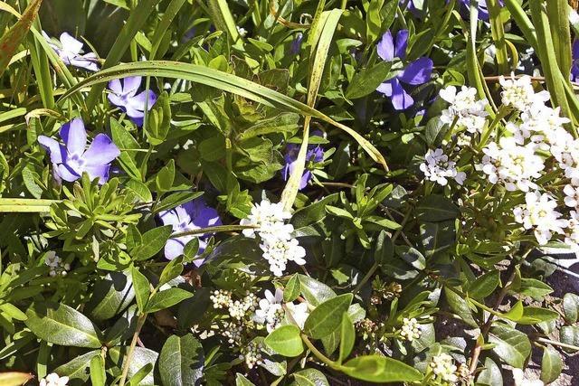 Pflanzen und Tipps dazu