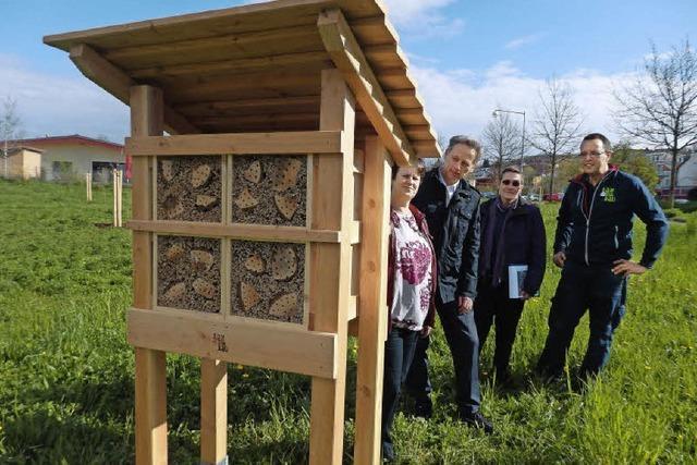 Insektenhotels öffnen ihre Pforten