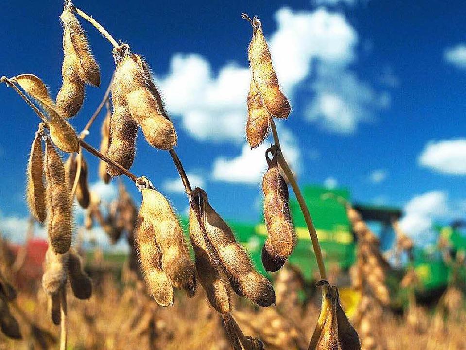 Sojabohnen liegen im Trend.  | Foto: dpa