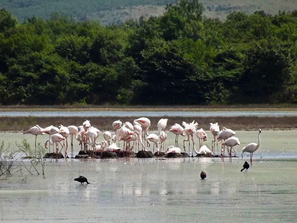 Gefährdete Vögel: Flamingos in einer S... einem Wasserbecken zur Salzgewinnung   | Foto: Euronatur