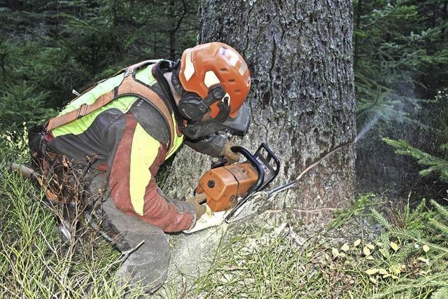 Keine Sorgen um den Absatz von Holz