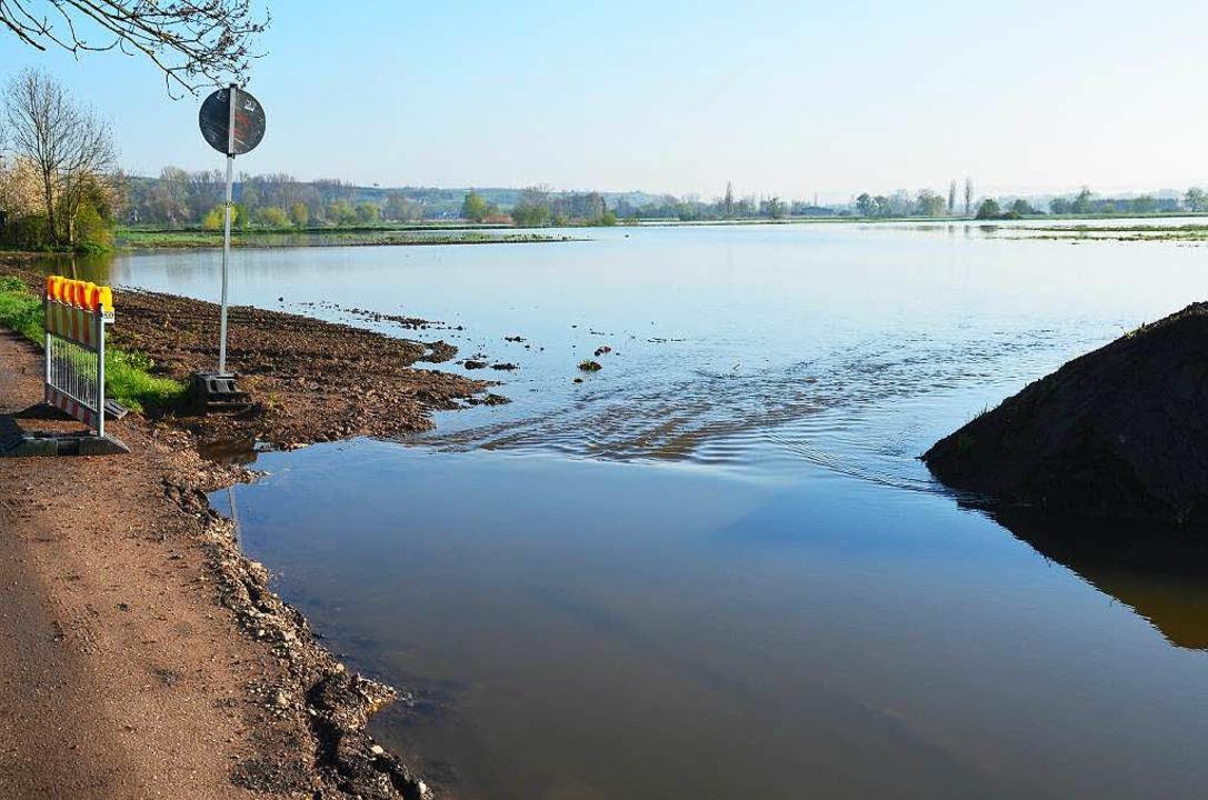 Breitflächig ergießt sich das Wasser b...tzingen und Gottenheim auf die Felder.  | Foto: Manfred Frietsch