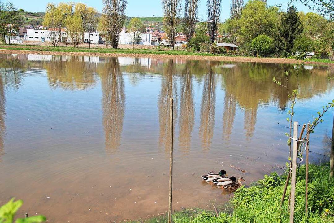 Weiter bachbawärts am Wisenweg haben E... überfluteten Acker für sich entdeckt.  | Foto: Horst David