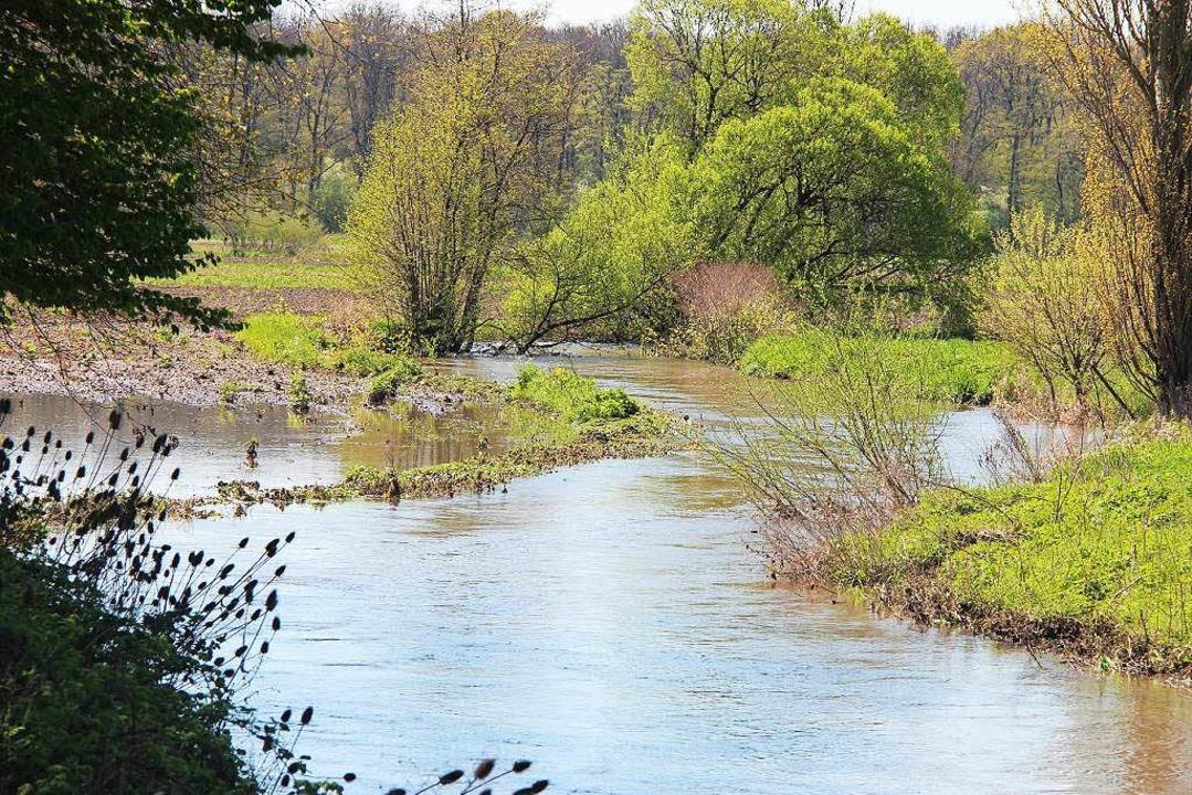 Auch der Neugraben führt reichlich Was...enzende Feld und Waldflächen geflutet.  | Foto: Horst David