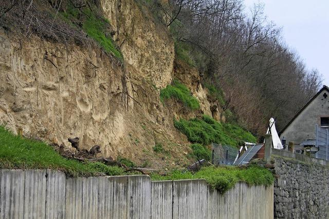 Kein Knabbern an der Lösswand am Mühlenberg