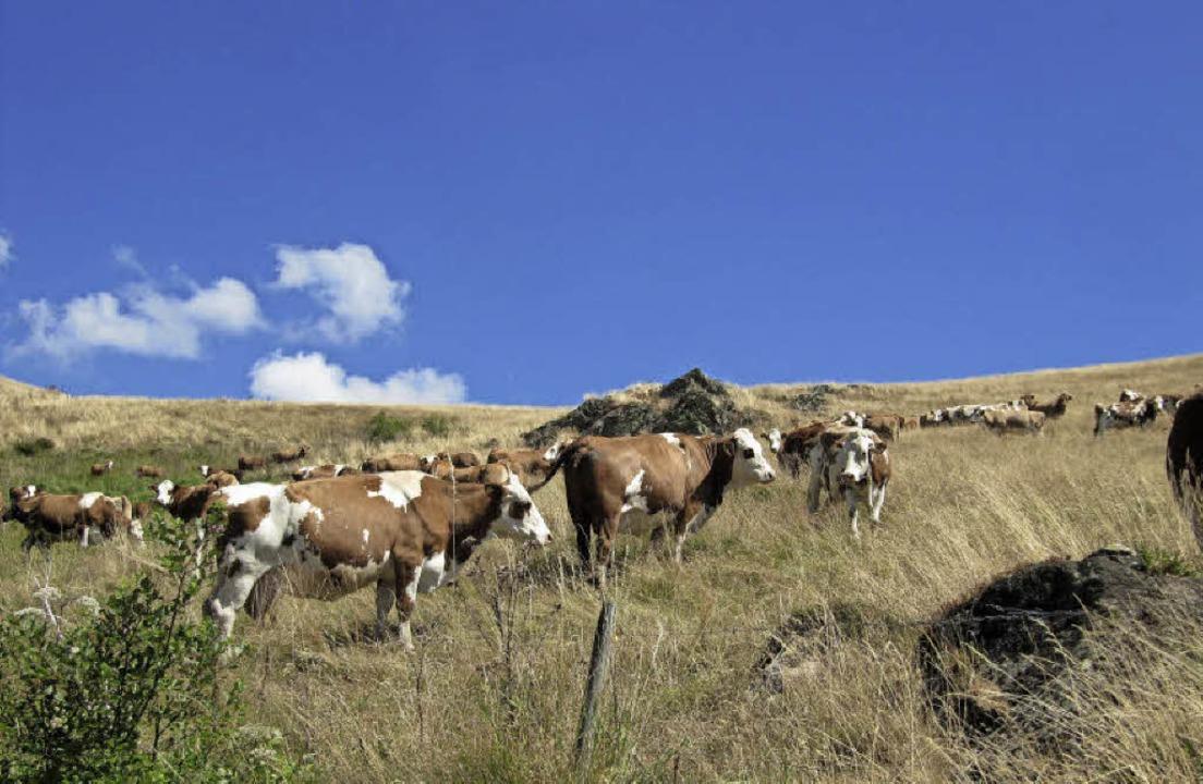 Milch und Fleisch aus der Region (im B...d Gemüse sieht die Sache anders aus.    | Foto: Susanne Filz