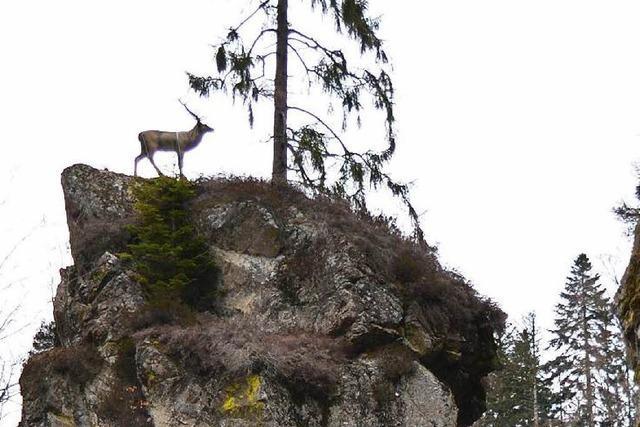 Wehratal-Hirsch darf bleiben – vielleicht sogar als Bronze-Skulptur?