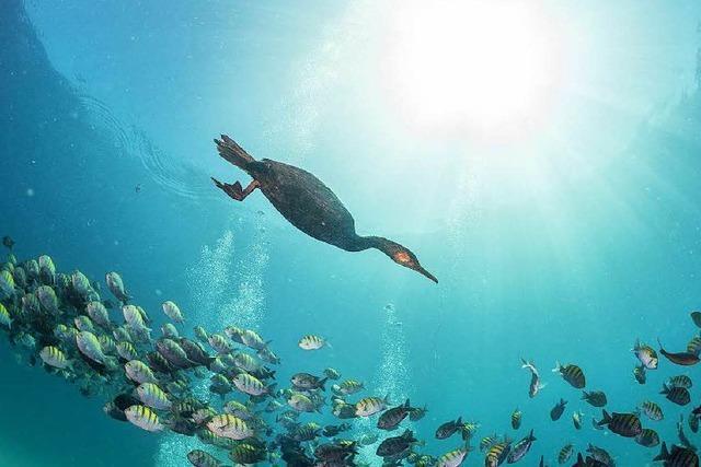 Warum der Phosphat-Kreislauf aus den Fugen gerät