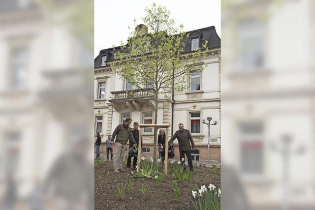 Ein Tulpenbaum vor der Sparkasse