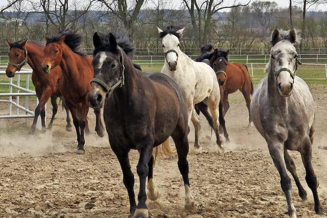 Mysteriöses Pferdesterben in Edel-Gestüt