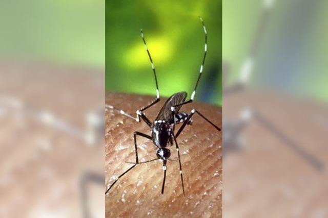 Prophylaxe und Mückenschutz sind Pflicht