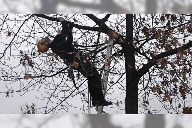 Schon 1500 Bäume geprüft