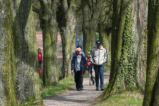 Unterwegs auf dem Neulindenpfad zwischen Endingen und Ihringen