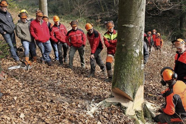 Holzernte ist das weitaus gefährlichste Arbeitsfeld