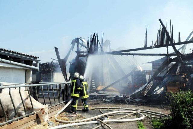 Hoher Schaden und tote Tiere nach Brand in Rinderstall
