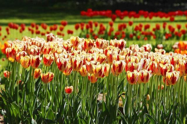 Blühende Frühlingsboten