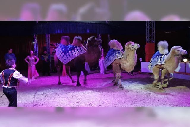 Circus Rudolf Busch gastiert auf dem Messeplatz