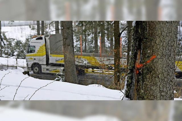 Bäume entlang der B500 und der Dreiseenbahn werden aus Sicherheitsgründen gefällt