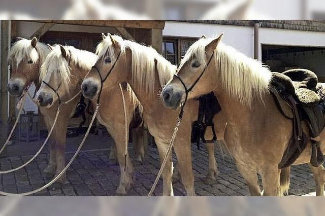 Wellness für Mensch und Pferd