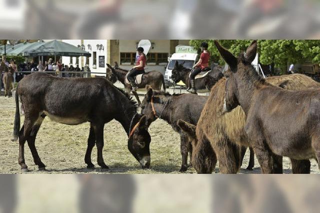Auf dem Mundenhof trafen sich Esel, Mulis und ihre Menschen