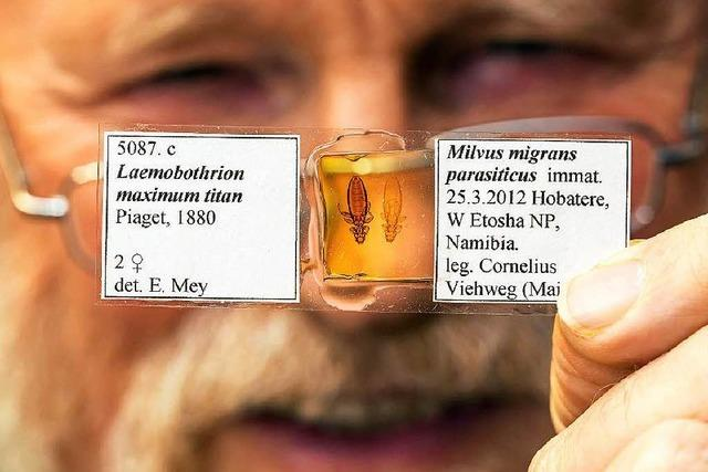 Eberhard Mey ist der einzige Läuse-Forscher Deutschlands