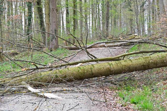 Jugendlicher verirrt sich im Wald – und tut das Richtige