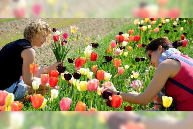 Eigene Ernte im Blumenmeer
