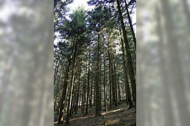 Risiken und Chancen des Klimawandels aus land- und forstwirtschaftlicher Sicht im Südschwarzwald in Höchenschwand
