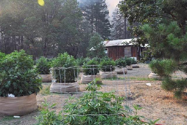 Wie Kiffer Cannabis weiter liberalisieren wollen