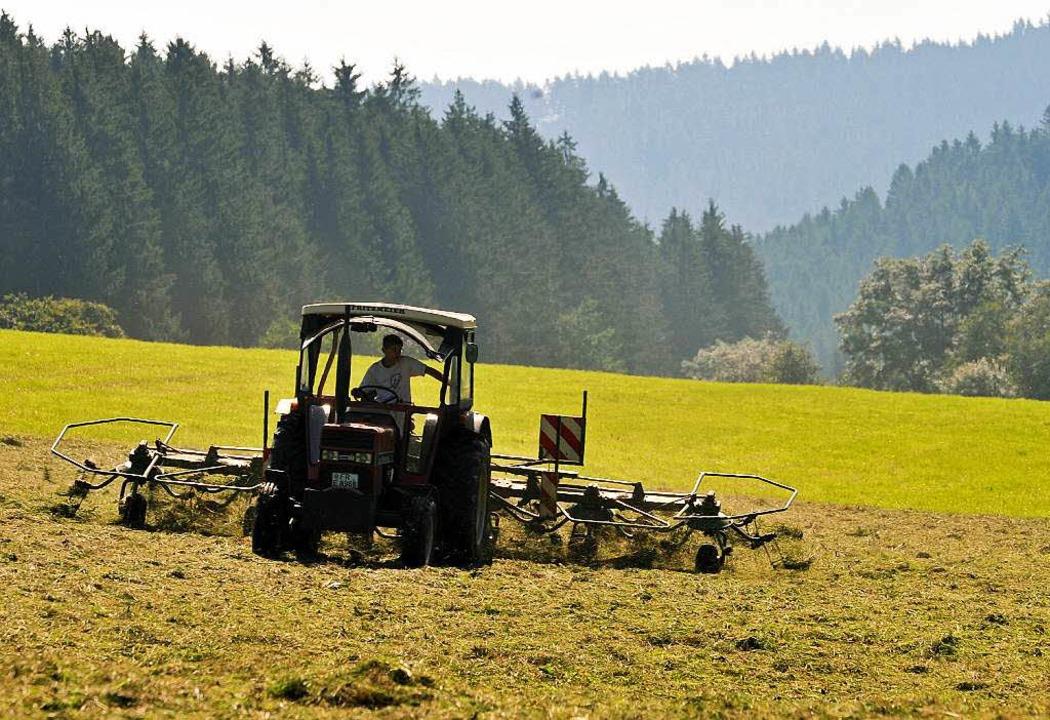 Die Landwirtschaft im Schwarzwald wird...; damit auch das Bild der Landschaft.   | Foto: dpa