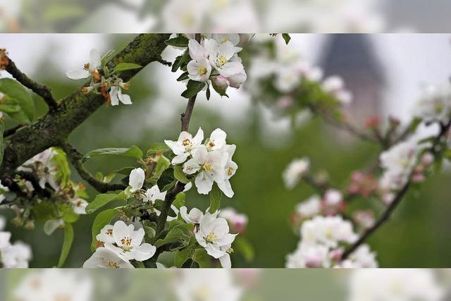 Vergangene Blütezeit