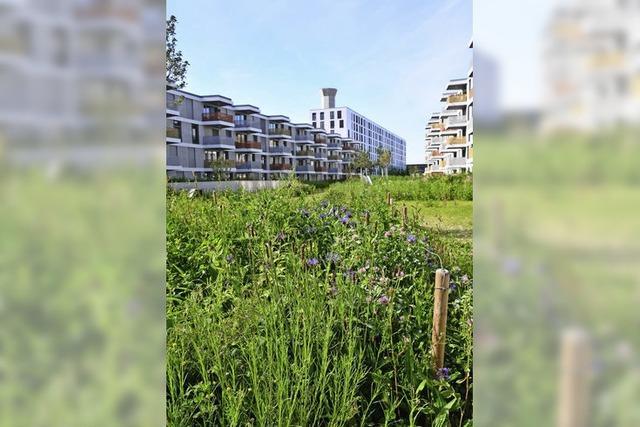 Das neue Basler Erlenmattquartier ist eine grüne Insel in der Stadt