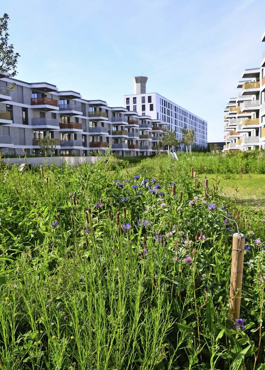 Das neue Erlenmattquartier auf dem ehe...schen Bahn lässt viel Raum für Natur.   | Foto: Annette Mahro