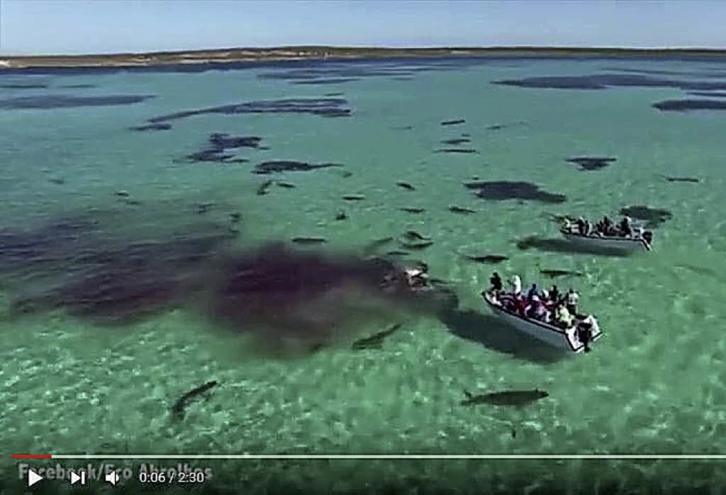 Shark Bay  | Foto: youtube