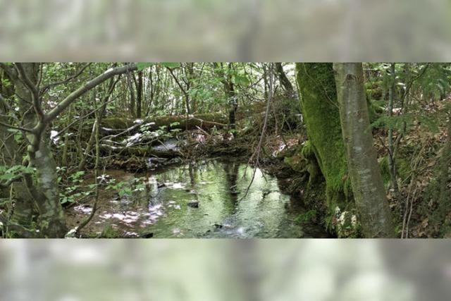 NEU ENTDECKT: Wie die Hexe in den Brunnen kam