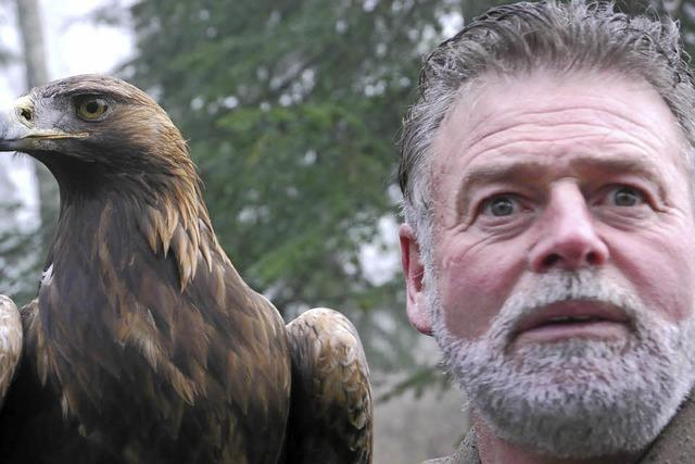 Freiflug von Greifvögeln mit Kommentar (Falikner Franz Ruchlak) in St. Märgen