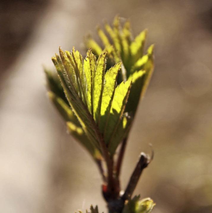 Mehr Licht für junge Pflanzen    Foto: Max Schuler