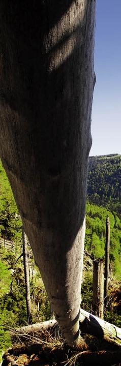 Tonnenschwere Stämme versperren noch i...urmschäden neue Chancen für die Natur.    Foto: Max Schuler