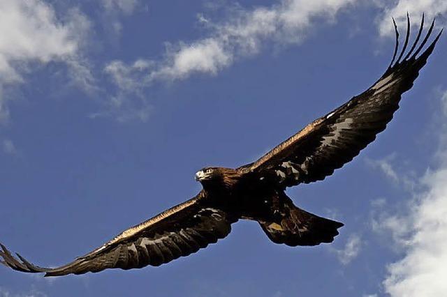 Rückkehr des Nationalvogels