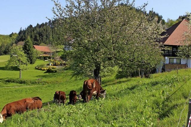 Rinder und Ziegen pflegen wieder die Landschaft