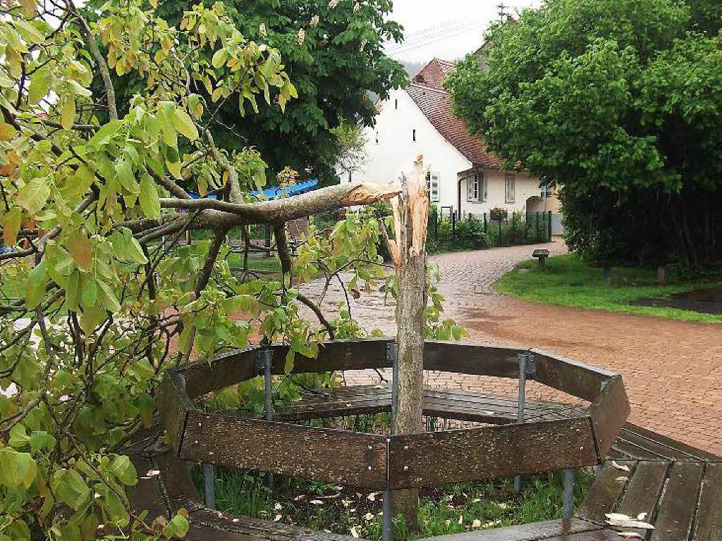 unbekannte f llen nussbaum auf schulhof kinder sind. Black Bedroom Furniture Sets. Home Design Ideas