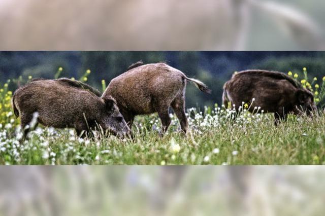 Jäger wollen Kooperation mit Landwirten