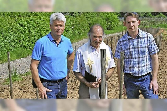 200 Weinstöcke gepflanzt